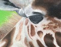 Giraffe -Pastel Painting