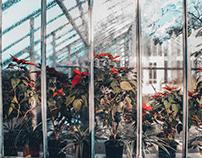 Botanical Garden Cluj-Napoca Romania