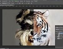 Dog-Tiger(Mix)