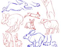 Animal Studies - Part 1