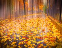 "Fine art prints ""Raining fall"" in Paris"