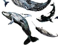 Dive into the Ocean - TMSI Whale Exhibition