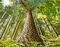 """Canada Post """"International Year of Forests"""""""