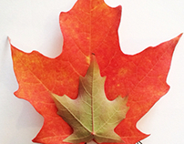 With maple leaves