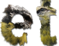 Bird Feeder - Type Object