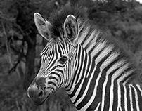 Kruger Feb 2014