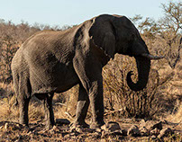 Wildlife of Kruger National Park for Verve Magazine