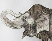 El elefante Infante