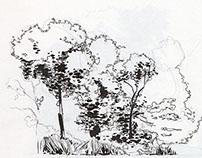 Plein Air drawings