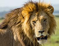 [6/14] Wildlife in Masai Mara, Kenya