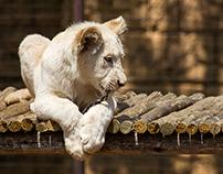 Zoo July 2014
