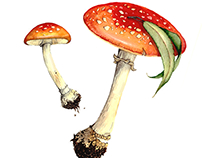 Watercolor mushrooms