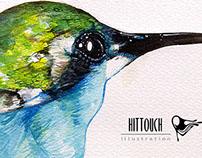 Sea hummingbird
