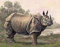 Animals illustration