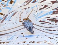 Blue-bellied spider