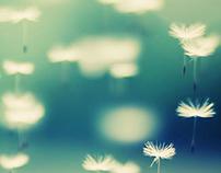 Fly Dandelions