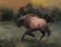 Belarus bison