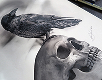 The Raven and The Skull - Pencil Drawing by Julio Lucas