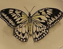 Paper Kite Butterfly Platter