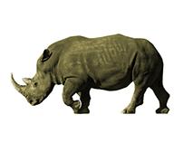 196 Rhinos