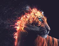Enchanted | Desktopography