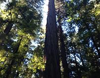 Redwood Weekend