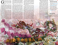 Pygmy Pipehorse article design