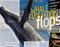 Whale article design
