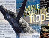 Whale article design