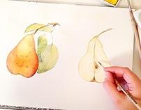 Pear watercolor