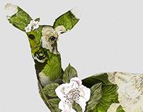 Magnolia Doe