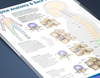 Spine Anatomy & Back Pain Poster