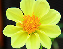 Nature Flora aka 大自然之花