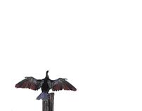 Bird of Heaven