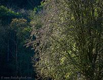 Spa Gill Wood