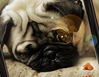 :: Royal Canin ::