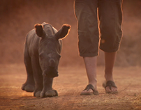 A Rhino Orphanage can help (FNB) | Promotional edit