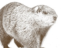 Stippling - Groundhog