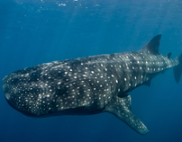 Caribbean Underwater