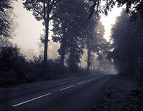 The Road at Dawn in the Forest