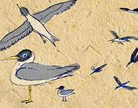 """""""O Canto dos Quatro Caminhos"""" / """"Birdwatching"""" OST 2014"""