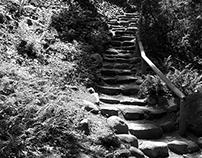 Botanic Garden stairs