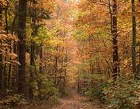 Autumn leaves - sunday trip