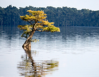 Photography-Reelfoot Lake