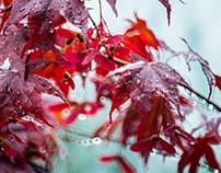 Read Leaf - Herbstlaub