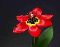 Still life photography - Flowers