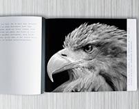 brochure for dm.m