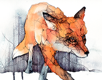 Red Fox for Memoria Recordings