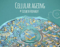 Cellular Ageing animation