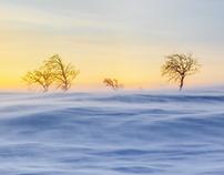 Arctic desert II